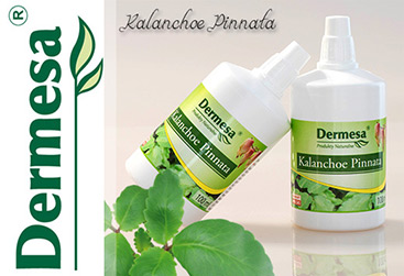 Sok z kalanchoe Pinnata 100ml